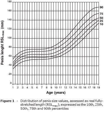 Alter penisgröße Welche Penisgröße