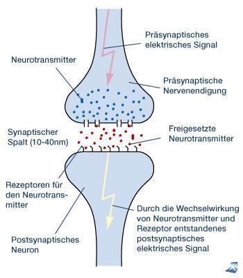 Synpase - (Sport, Körper, Drogen)