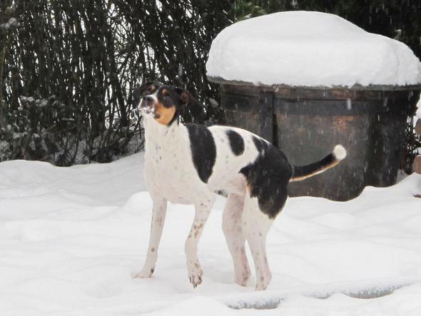 Rike - (Freizeit, Sport, Hund)
