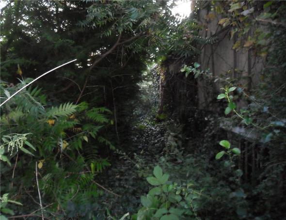 Verwilderter Garten Was Tun Verlassen Unkraut Gartenarbeit