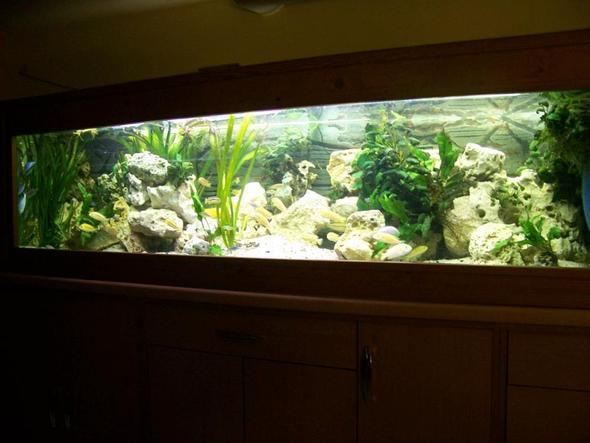 aquarium r ckwand selber aus stein bauen fische aquaristik. Black Bedroom Furniture Sets. Home Design Ideas