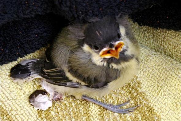 vogelnest im garten kinder rennen herum krankheit v gel sterben. Black Bedroom Furniture Sets. Home Design Ideas