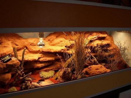 mein terrarium - (Einrichtung, Terrarium, Gecko)
