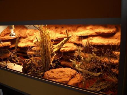 leoterrarium 130x50x65cm - (Einrichtung, Terrarium, Gecko)