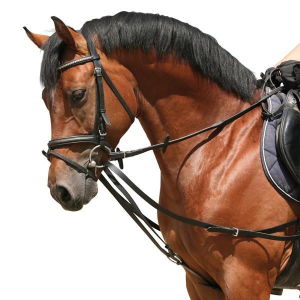 Ausbinder, Wer Kennt Sich Da Aus? (Pferde, Reiten, Pony