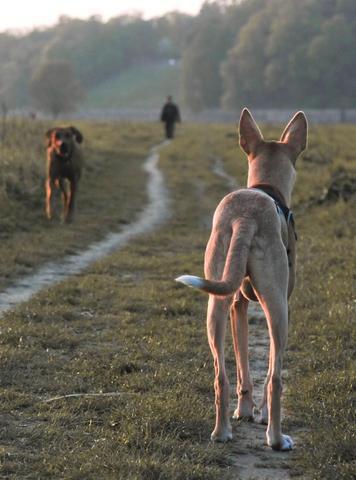 begegnung - hund von hinten - (Tiere, Hund, Menschen)