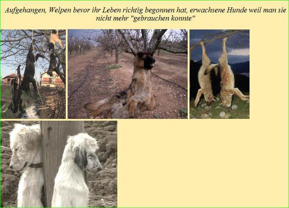 Darum Tierschutz im Ausland 1 - (Freizeit, Tiere, Hund)