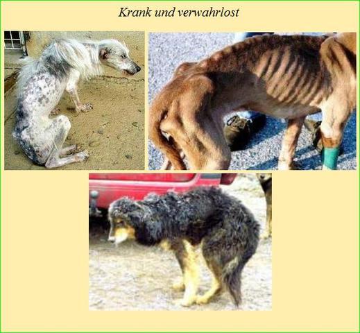 Darum Tierschutz im Ausland 2 - (Freizeit, Tiere, Hund)