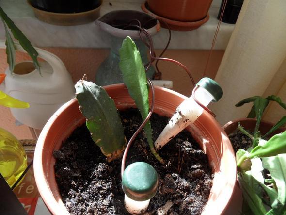 Bewässerungssystem mit keram. Konusse - (Zimmerpflanzen, bewässern)