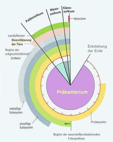Die Lebewelt seit dem Präkambrium - (Freizeit, Wachstum, Erdkunde)