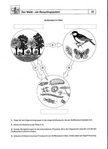 Vorlage - (Schule, Freizeit, Biologie)