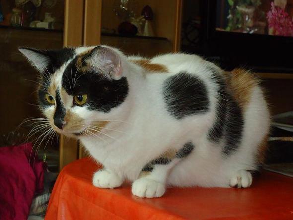 Diese Katzen mussten ohne Mutter aufwachsen, sind aber in der Zwischenzeit richt - (Katzen, Geburt, Katzengeburt)