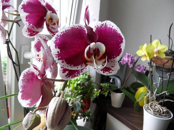 ausgetrocknete orchidee was kann ich tun pflanzen orchideen. Black Bedroom Furniture Sets. Home Design Ideas