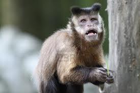 Affen Für Zuhause Kaufen Nur Eine Andere Bildergalerie