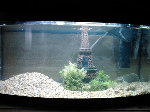 Fischbecken 2 - (Fische, Aquarium)