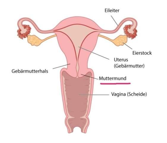 Muttermund offen
