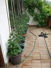 - (Garten, Hochbeet)