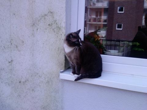 Sollte man ein katzennetz haben haustiere katzen