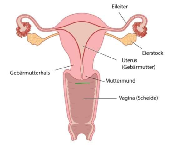 - (Gesundheit und Medizin, Menstruation, Tampon)