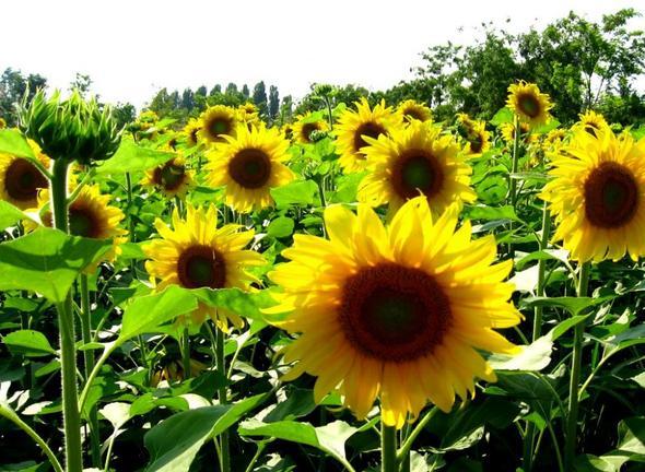 hier Bienenbestäubung - (Garten, Pflanzen, Blumen)