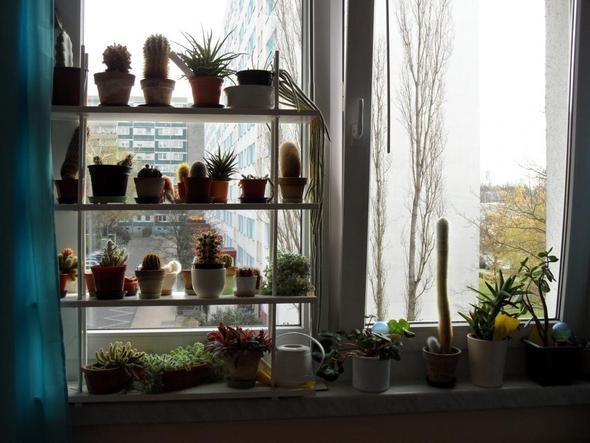 kaktus einpflanzen ohne weh zu tun blumen kakteen gartenarbeit. Black Bedroom Furniture Sets. Home Design Ideas