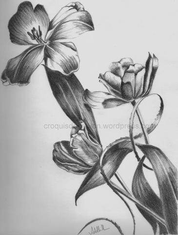 Einzelne Blume Mit Bleistift Zeichnen Zum Geburtstag Nur