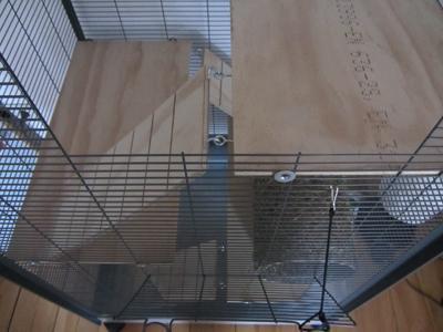 Nagervoliere - Bretter und Leitern befestigen - (basteln, bauen, Vögel)