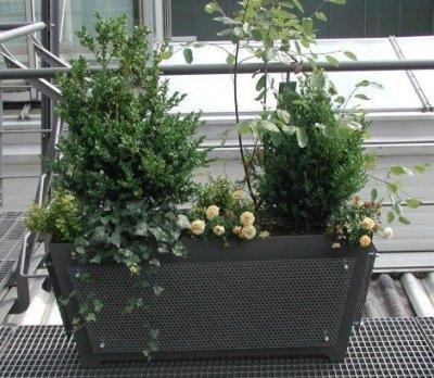 auf meinem balkon wimmelt es vor kellerasseln. Black Bedroom Furniture Sets. Home Design Ideas