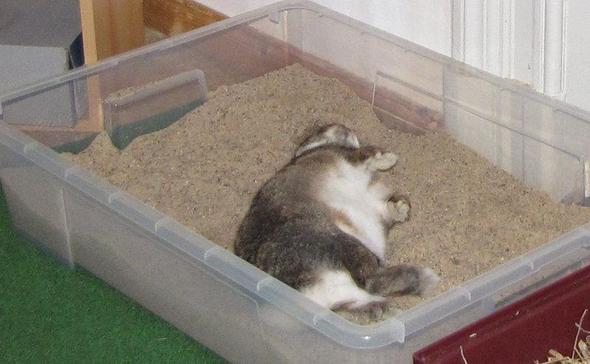 hilfe mein kaninchen w lzt sich im acker wie ein hund w lzen. Black Bedroom Furniture Sets. Home Design Ideas