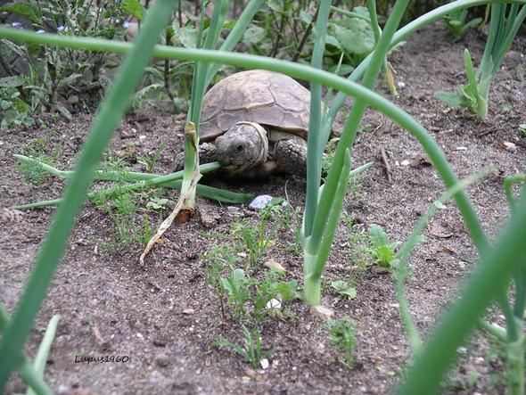 Schildkröte - (Pflanzen, Gift, Schildkröten)