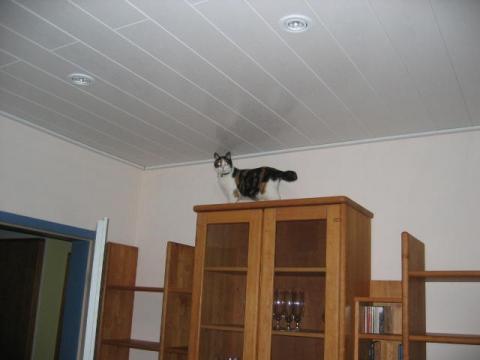 wie kann ich katzen auf meinen schrank klettern lassen tiere haustiere. Black Bedroom Furniture Sets. Home Design Ideas