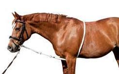 Longierhilfe - (Pferde, Muskelaufbau)