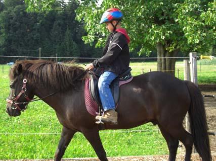 so geht es wenn man nicht durchs genick reitet - (Pferde, reiten, Genick)