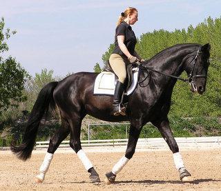 Durchs Genick - (Pferde, reiten, Genick)