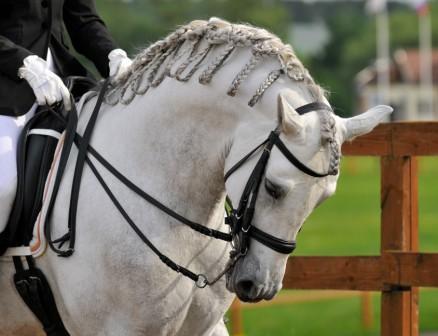 Rollkur - (Pferde, reiten, Genick)