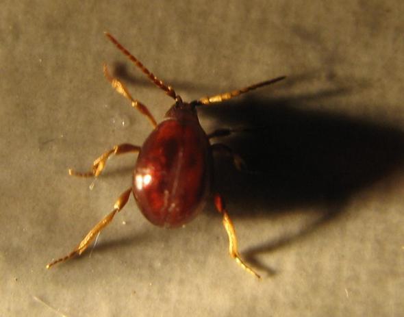 Scharf & eklig - (Insekten, Spinnen, Ungeziefer)