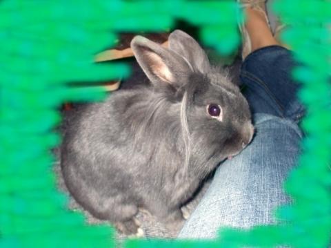 Das ist Momo. Er tut übrigens nur so lieb ;) - (Größe, Kaninchen)