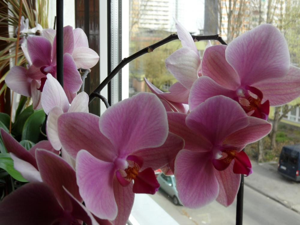 wie topfe ich orchideen richtig um pflanzen blumen. Black Bedroom Furniture Sets. Home Design Ideas