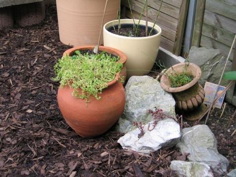 Probleme mit Efeu im Beet (Ratgeber, Garten, Pflanzen)