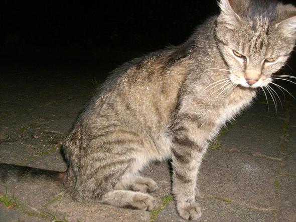 zwei - (Tiere, Katze, Tierschutz)