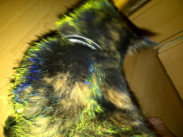 sina - (Katze, Farbe, Ratgeber)