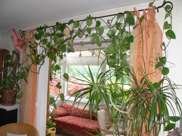 welche schnell wachsende schlingpflanze eignet sich f rs. Black Bedroom Furniture Sets. Home Design Ideas