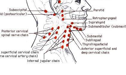 Der Schmerz im Rücken von prisseda