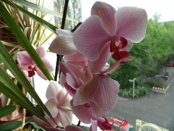 wie pflege ich orchideen richtig pflanzen wie pflege ich. Black Bedroom Furniture Sets. Home Design Ideas