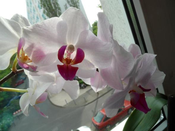 wie pflegt man orchideen richtig pflege blumen giessen. Black Bedroom Furniture Sets. Home Design Ideas