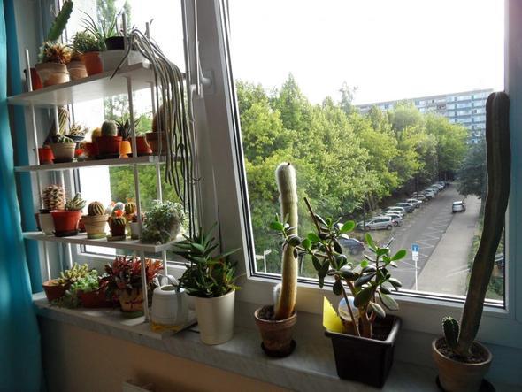 mein Kakteenfenster - (Wasser, kaktus, Giessen)