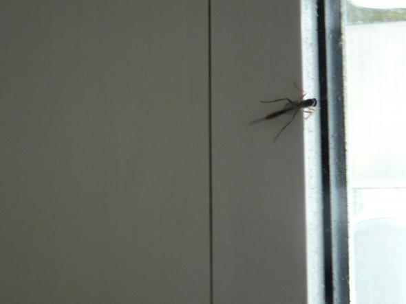 04 - (Insekten, Insektenbestimmung)