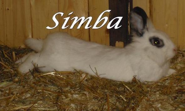 flauschieg und gesund =D - (Tiere, Kaninchen, müde)