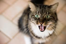 ICH-WILL-ABER-JETZT! - (Katze, Katzen, katzenhaltung)