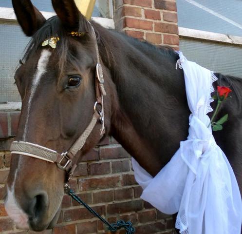 ... und Tanne - (Pferde, reiten, Kostüm)